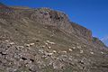 Basalt cliffs, Isle of Canna - geograph.org.uk - 304048.jpg