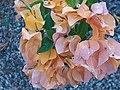 Beauty of flowers hd.jpg