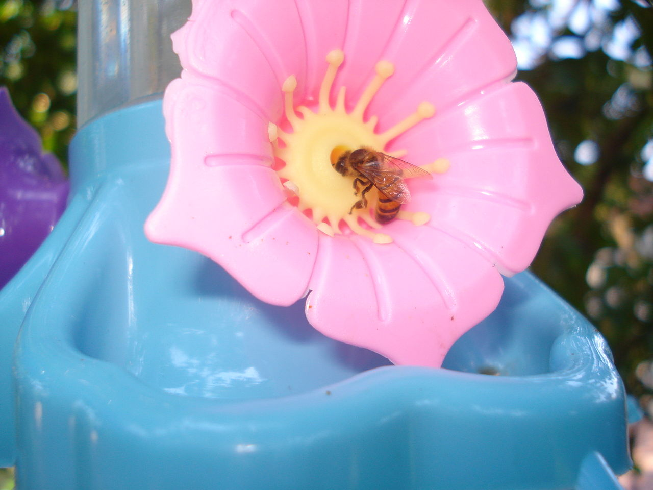 filebee and artificial flower 01jpg wikimedia commons