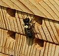 Bee box (35389675431).jpg