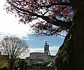 Beech tree, park, Union Street, Torquay - geograph.org.uk - 1840988.jpg