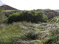 Beltrim Townland - geograph.org.uk - 1503121.jpg