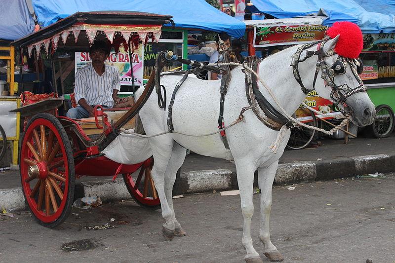 Bendi bakudo, kereta kuda tradisional Minangkabau di jalananKota Bukittinggi,Sumatera Barat