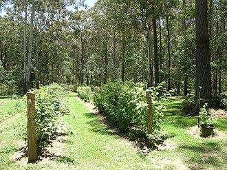 Niangala, New South Wales - Koolkuna Berry Farm