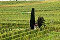 Beste Weinlagen an der Mosel. 01.jpg
