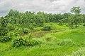 Bhiwali Near Ganeshpuri,Vasai, Maharashtra - panoramio (31).jpg