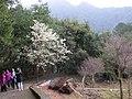 Biluojiao 碧絡角 - panoramio (2).jpg