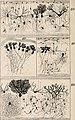 Biologisches Zentralblatt (1897) (19760588293).jpg