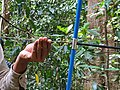 Biologist extracting wood core IMG 20201127 123552.jpg