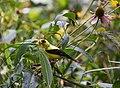 Bird in forest (42731945310).jpg