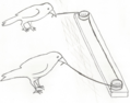 Birds in cooperative pulling experiment - sketch.png