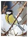 Birds in the garden (15951425228).jpg