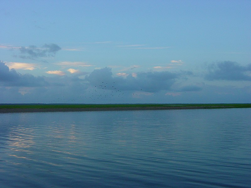 File:Birds over the salt marsh, Bull Island in the distance - panoramio.jpg