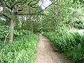Black Carr bridleway, Tong - geograph.org.uk - 1381523.jpg