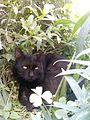 Black Cat in the Garden.jpg