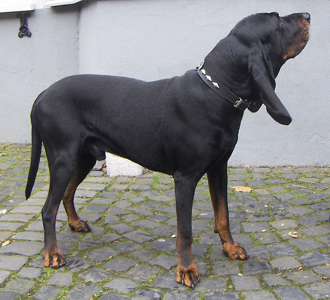 Black and tan dog breeds