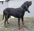 Perro negro y fuego para la caza del mapache