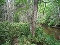 Bloomfield Provincial Park IMG 8259 (1848227303).jpg