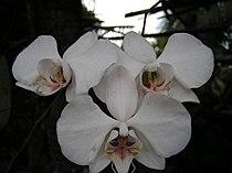 Boholflora7.jpg
