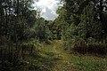 Bois d'Acren 06.jpg