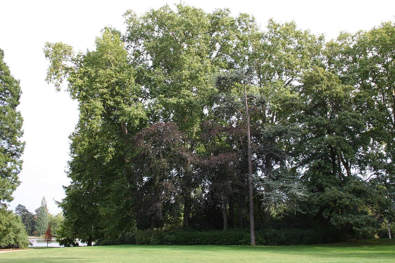 Location Vélo Bois De Vincennes - File Bois de Vincennes 20060816 40 jpg Wikimedia Commons