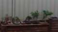 Bonsai trees.png