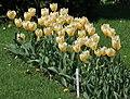 Botanic garden - Cluj-Napoca (4543590819).jpg