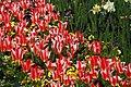 Botanic garden - Cluj-Napoca (5676847935).jpg