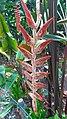 Botanical Garden Singapore (27375431559).jpg