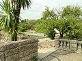 Botanischer Garten München-Nymphenburg - DSC07533.jpg