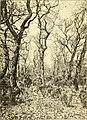 Botanisk tidsskrift (1914) (20217136488).jpg