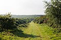 Bridleway BS8 descends Brighstone Down to cross Tennyson Trail - geograph.org.uk - 540095.jpg