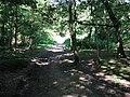 Bridleway through Wiggonholt Common - geograph.org.uk - 1328049.jpg