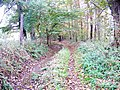 Bridleway to Carnaby - geograph.org.uk - 591251.jpg