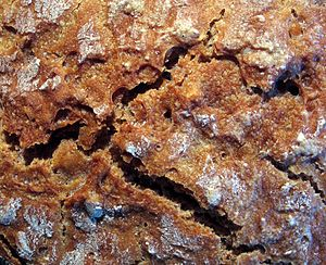 Brown bread - Crust of a brown bread