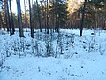 Bryansky District, Bryansk Oblast, Russia - panoramio (39).jpg