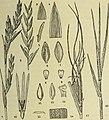 Bulletin du Muséum d'histoire naturelle (1921) (14758397546).jpg