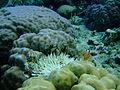 Bunaken Marine Park (9).JPG