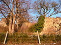 Burg Baden in Badenweiler 10.JPG