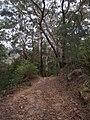 Burgh Track - panoramio (9).jpg