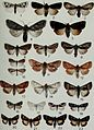 Butterflies and moths of Newfoundland and Labrador - the macrolepidoptera (1980) (20324390959).jpg