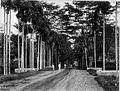 COLLECTIE TROPENMUSEUM Een straat te Medan. TMnr 60001716.jpg