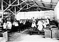 COLLECTIE TROPENMUSEUM Het uitzoeken van de steeltjes door Soendanese vrouwen Theefabriek Sedep Priangan TMnr 10012017.jpg