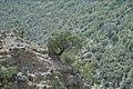 Cañon de San Lorenzo. Saltillo, Coahuila - panoramio (35).jpg