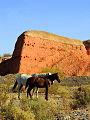 Caballos en Paso Cordova, Gral Roca.jpg