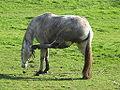 Cabalo, Teo, Galiza.jpg