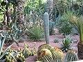 Cactii Majorel Gardens.JPG