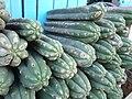 Cactus san pedro.jpg
