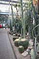Cactuses Prague botan garden.jpg