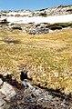 Calvitero 1976 09.jpg